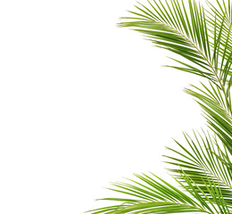 Green palm branches in a frame