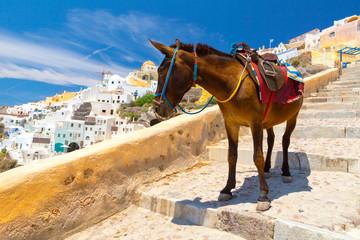 Foto op Plexiglas Ezel Donkey taxis in Santorini Island, Santorini, Greece