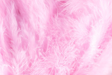 Macro shot of pink bird fluffy feathers in soft and blur style Fototapete