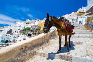 Donkey taxis in Santorini Island, Santorini, Greece