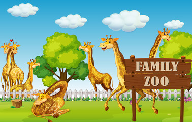 A giraffe family in the zoo