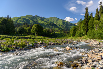Fast mountain river among mountain meadows. Stream of a mountain river. Mountain plateau in Abkhazia