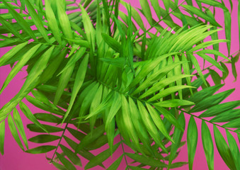Palm Tropical greenery minimal artistic design