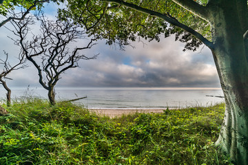 landscape, sea, trees