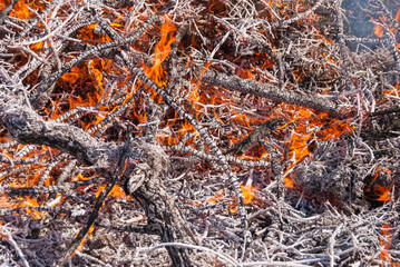 strong fire in the afternoon in the field close-up
