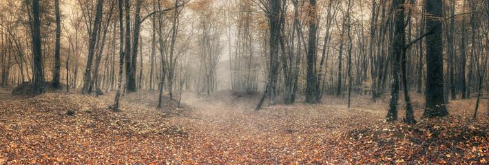 Осенний лиственный лес на Кавказе, Краснодарский край, Россия
