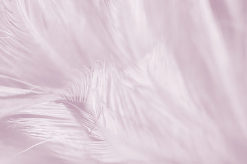 Wall Mural - violet vintage color trends chicken feather texture background