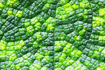 Wall Mural - close up of beautiful fresh leaf plant