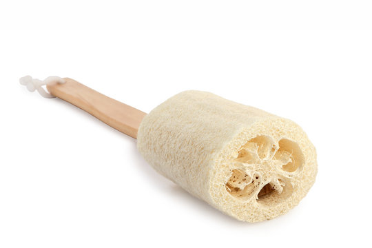 Luffa sponge isolated with clipping path.