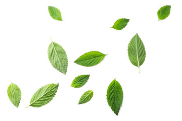 Photo sur Toile Condiment Flying mint leaves