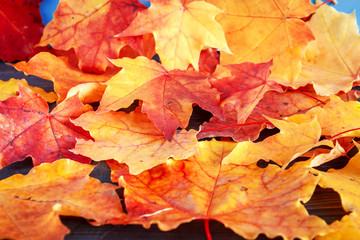 Autumn leaves closeup .Autumn season concept