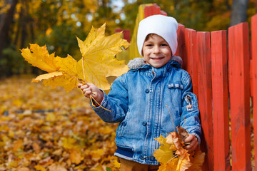 Cute, happy, white boy in blue jeans coat smiling and playing with bouquet of yellow leaves. Little child having fun in autumn park. Concept of happy childhood, leaves fall