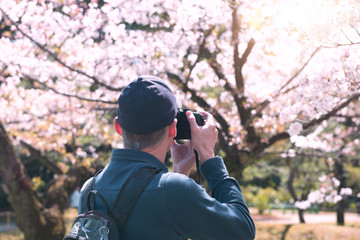 Tourist photographer is taking photo with beautiful Cheery Blossom during spring season in Japan.