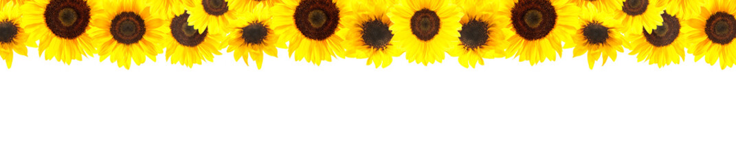 Yellow sunflowers background