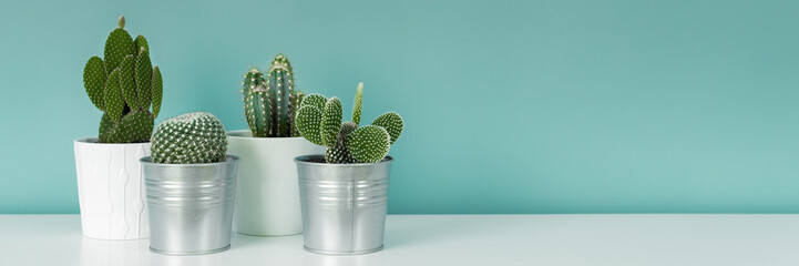 Fotobehang Cactus Modern room decoration. Collection of various potted cactus house plants on white shelf against pastel turquoise colored wall. Cactus plants banner.