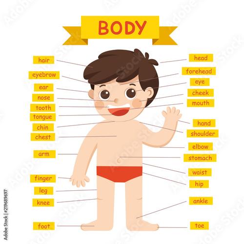 Illustration of Boy body parts diagram.\