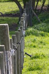Boundary Fences