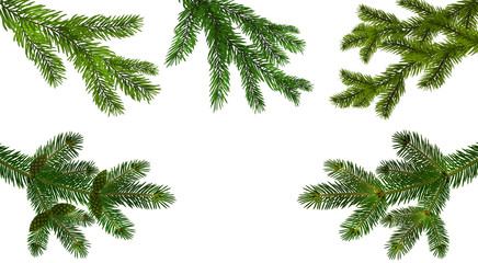 Christmas, New Year. Set from the five green realistic branch of fir or pine close-up. branched out. Isolated on white background. illustration