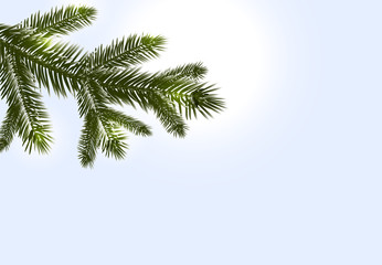 Christmas, New Year. Realistic branches of fir or pine close-up. Morse winter morning. illustration