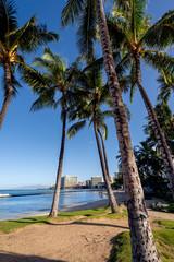 Palm Trees on Waikiki Beach