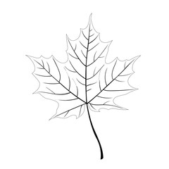 Contour maple leaf isolated on a white background. Autumn element for your design. Monochrome vector illustration.