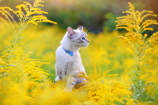 Side view portrait of a cat at the summer meadow