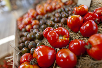 Different tomato varieties lies in a basket