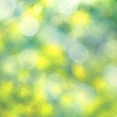 Abstract background of blur selective focus of morning garden of foliage tree with bokeh
