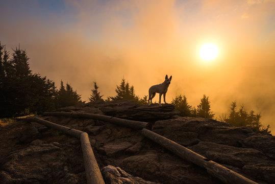 Shepherd and sunset, Mount Craig, North Carolina