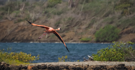 Flamingo -  Views around Curacao a Caribbean Island