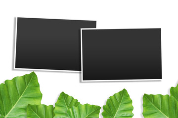 template photo frames with Tropical on white background