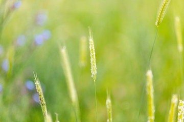 Bright field, spring grass