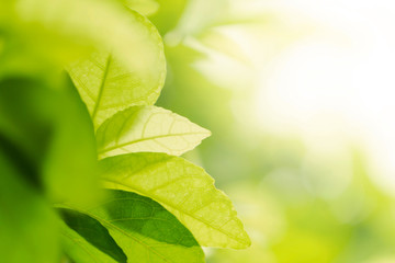 grown up business background concept. closeup natural leaf green or plant in garden with sunlight.