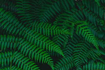 Dark botanical background tropical fern faded leaf