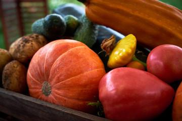 Organic vegetables on wood. Harvested vegetables. Healthy Lifestyle,. Vegetarian food.