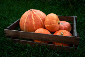 Autumn pumpkins on wooden box background. Fall decoration