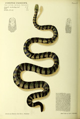 Illustration of snake