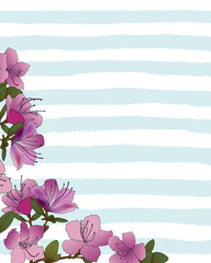 background of pink rhododendron flowers on strips
