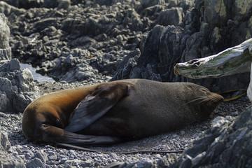seal colony 20100725