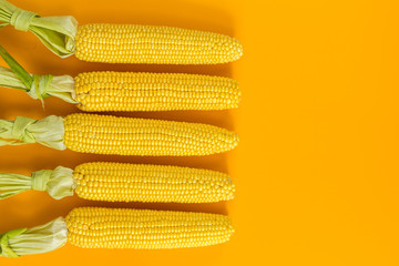 Corn on yellow surface as decoration for Thanksgiving Table, Halloween, and the Fall Season