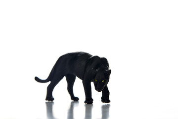 Printed roller blinds Panther Black panther portrait white background