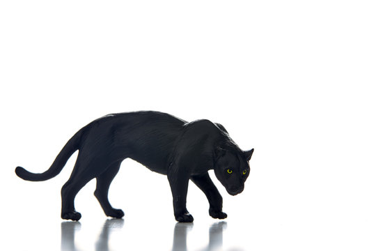 Black panther portrait  white background