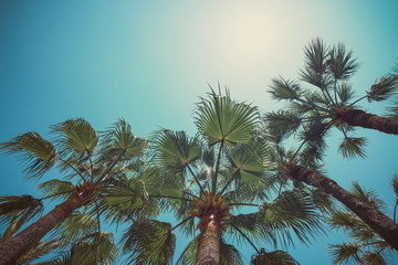 Palm trees angle view to sky vintage color stylized