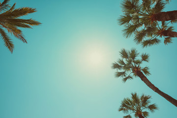 Palm trees vintage color toned summer hot day perspective view with copy space
