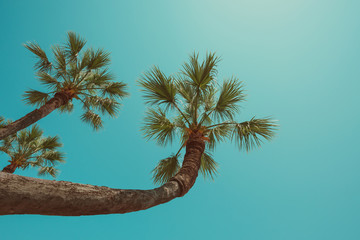 Palm tree curve hanging over sea south beach resort vintage color stylized clear summer sky