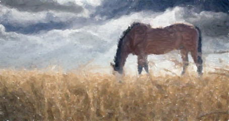 Stallion. Field of Wheat