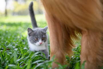 The kitten is playing in the meadow