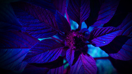 Tropical leaf with neon light