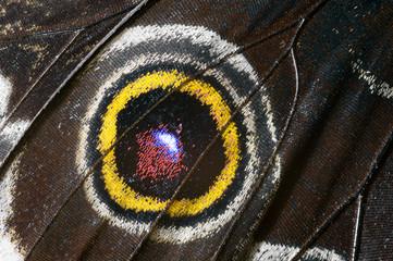 Beautiful butterfly wing, macrophoto