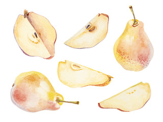 Watercolor pear and cutted pieces  of pear on white background